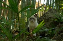 Little Kitten Hid Among The Green Grass.
