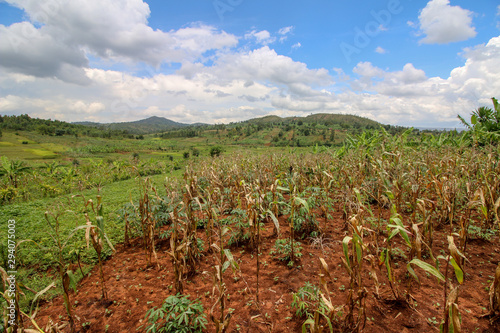 Agricultural Development in the Gitega Province of Burundi where inter-cropping Canvas Print