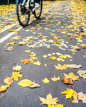 Cyclist In Motion On Road For Bicycle In Autumn With White Symbol Line And Yellow Fallen Leafs On Road