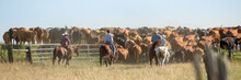 Round Up On The Ranch