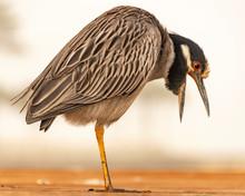 Heron Bird On The Beach Nature...