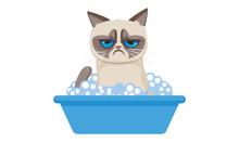 Grumpy Cat Washing