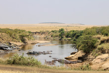 View Over The Mara River In Kenya's Maasai Mara National Reserve. A Popular Spot For Spotting River-crossings By Wildebeest. Carcass In Water And Safari Vans In Background