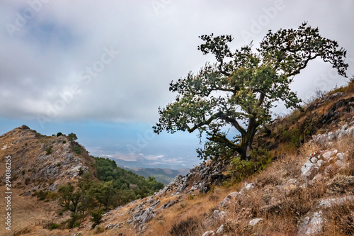 An Oak tree stands on a steep hill on a partly cloudy day at Fremont Peak State Park, in the Gabilan Mountains, of Monterey and San Benito counties in central California.