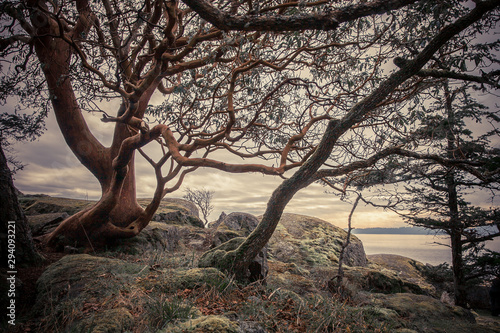 Photo Arbutus tree landscape