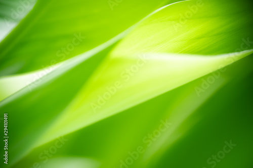 Closeup nature view of green leaf on blurred greenery background in garden with copy space using as background natural green plants landscape, ecology, fresh wallpaper concept. #294101491