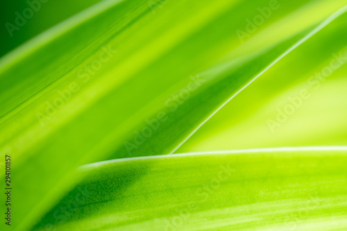 Closeup nature view of green leaf on blurred greenery background in garden with copy space using as background natural green plants landscape, ecology, fresh wallpaper concept. #294101857
