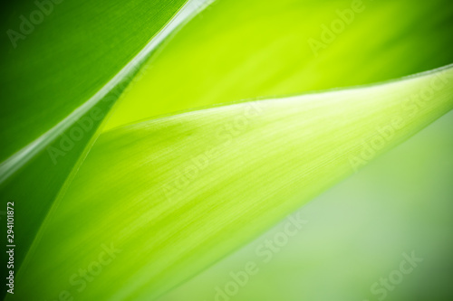 Closeup nature view of green leaf on blurred greenery background in garden with copy space using as background natural green plants landscape, ecology, fresh wallpaper concept. #294101872