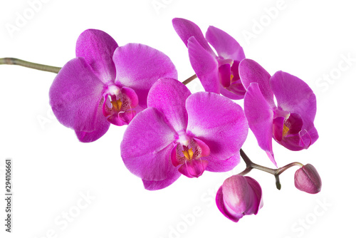 Fotobehang Orchidee Orchid isolated on white
