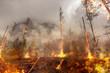 Waldbrand - Feuer - Naturkatastrophe