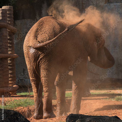 African elephant, Mother elephant and baby elephant Canvas Print