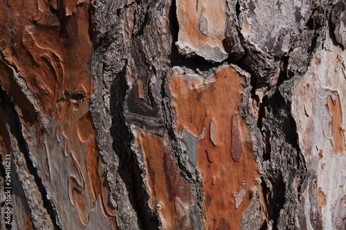 Valokuvatapetti Corteza de árbol