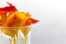 Edible Flowers. Closeup Of Ora...