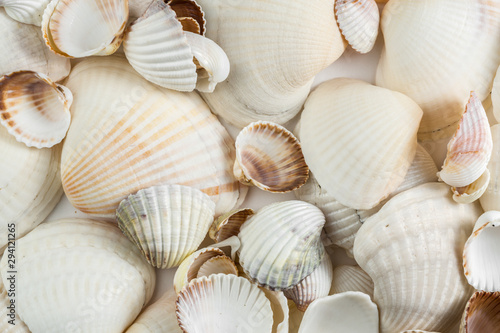 background of small shells beige shades on a white background. Fototapeta
