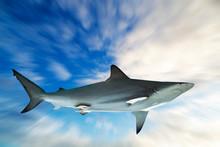 Shark On Blue Sky Background Zoom Blur Effect Background