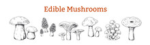 Mushrooms. Hand Drawn Vintage Illustration With Organic Food Mushrooms, Vegetarian Sketch. Vector Collection Isolated Various Raw Forest Boletus For Kitchen Or Black Engraving On White Background