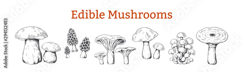 Fototapeta Mushrooms. Hand drawn vintage illustration with organic food mushrooms, vegetarian sketch. Vector collection isolated various raw forest boletus for kitchen or black engraving on white background obraz