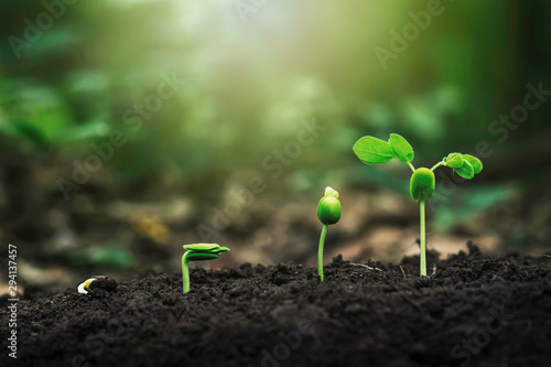 Cadres-photo bureau Vegetal Plant growth on the soil