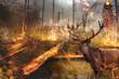 Hisch steht im brennenden Wald