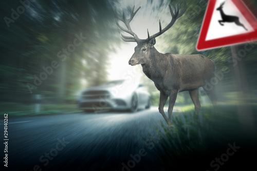 Route dans la forêt Wildunfall - Hirsch - Straßenverkehr