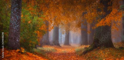 Foto auf Gartenposter Schokobraun autumn forest