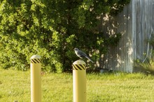 Cute Little Bird On White Fence Post On Green Plants Backround. Beautiful Green Summer Backgrounds.