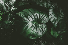 Close Up Tropical Nature Green...