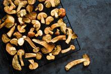 Drying Fresh Forest Mushrooms ...