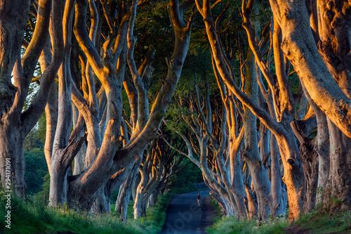 Foto auf Gartenposter Blaue Nacht The Dark Hedges - County Antrim - Northern Ireland