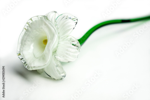Door stickers Narcissus Glass narcissi daffodil flowe close up on white background