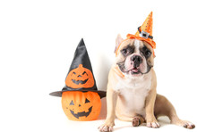 Portrait Of French Bulldog With Hat Halloween And Smile