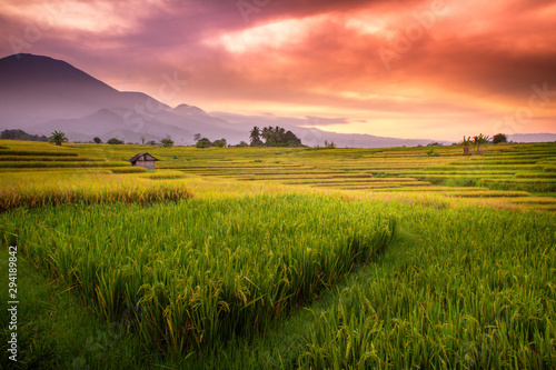 Spoed Fotobehang Pistache beauty morning dew in rice fields with beauty red sky and mountain range