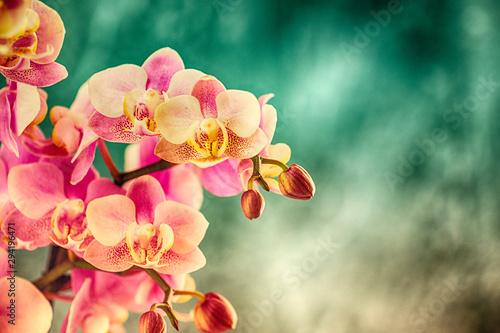 Printed kitchen splashbacks Orchid Orchidee, Orchideenblüten, Hintergrund beschreibbar