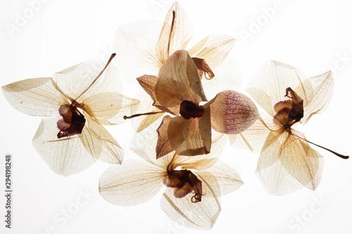 Canvas Prints Orchid stillleben orchidee