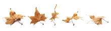 Set Autumn Yellow Dry Leaves I...