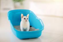 Cat In Litter Box. Kitten In T...