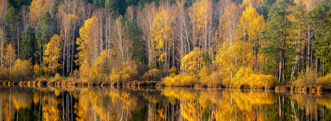 Fototapeta Rzeki i Jeziora panorama of autumn forest on the river Bank in the Urals, Russia, October