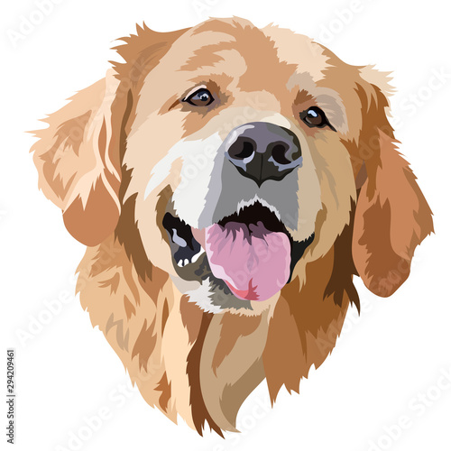 Obraz na plátně Golden Labrador Retriever Head Vector Illustration