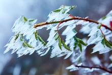 Frozen Winter Nature Photo Ice...