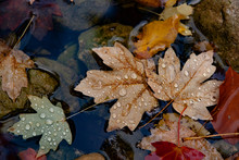 Leaves In Water After Rain