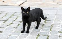 A Black Cat Stands On A Road P...