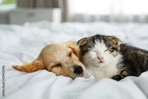 Obraz Adorable little kitten and puppy sleeping on bed indoors - fototapety do salonu
