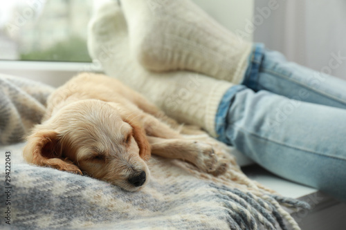 Poster Chien Cute English Cocker Spaniel puppy sleeping on blanket near owner indoors