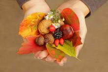 Female Hands Holding Autumn Ob...