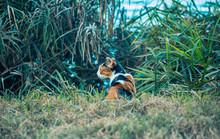 Calico Cat Hiding In The Grass