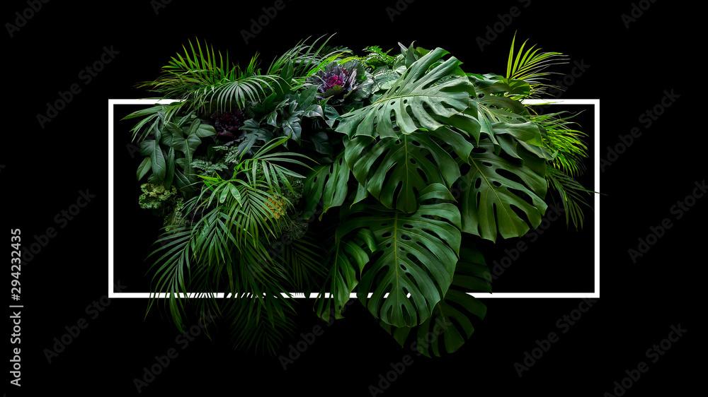 Fototapeta Tropical leaves foliage jungle plant bush floral arrangement nature backdrop with white frame on black background.