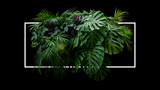 Tropical leaves foliage jungle plant bush floral arrangement nature backdrop with white frame on black background.