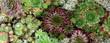 canvas print picture - Sukkulenten - Fettpflanzen - Wüstenblumen
