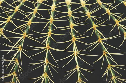Keuken foto achterwand Cactus Closeup of Echinocactus grusonii, Golden Barrel Cactus Abstract Natural Pattern Background
