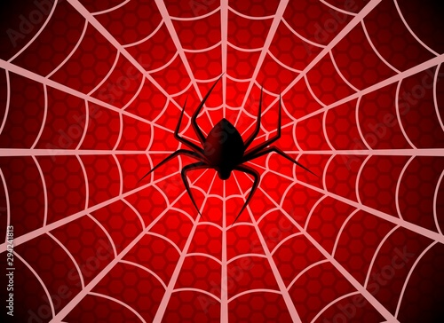 Fotografía Spider web